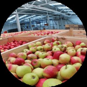 Холодильная камера для яблок