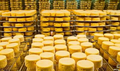 Холодильная камера для дозревания сыра