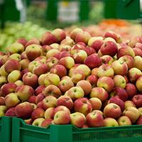 Как увеличить срок хранения фруктов в фруктохранилищах