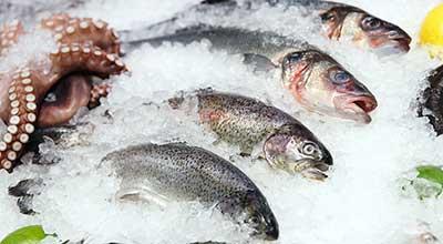 Холодильная камера для рыбы
